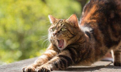ヨガ 猫のポーズ
